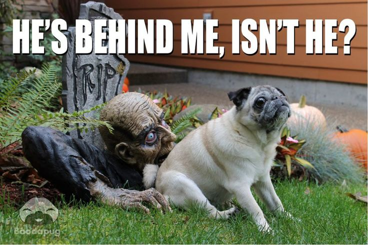 30 Funny animal captions - part 5 (30 pics)