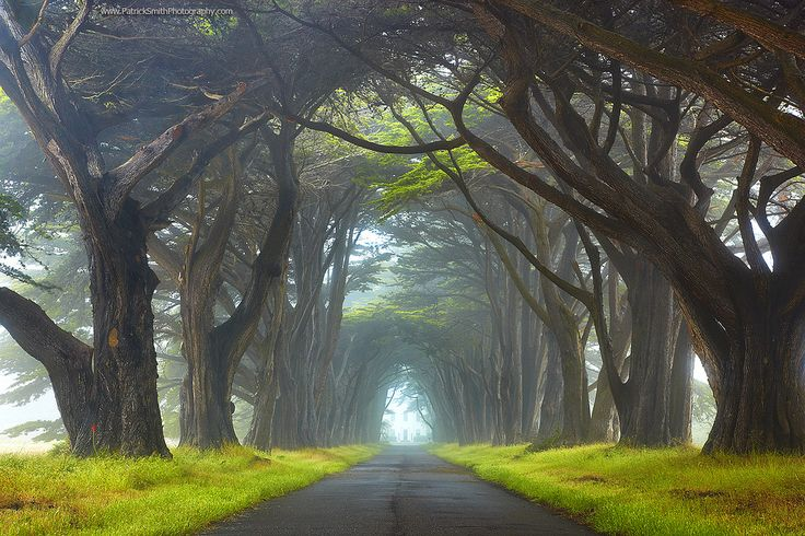 .: The Roads, Trees Tunnel, Natural Photography, Patrick'S Smith, King Points, California, National Seashore, San Francisco, King National