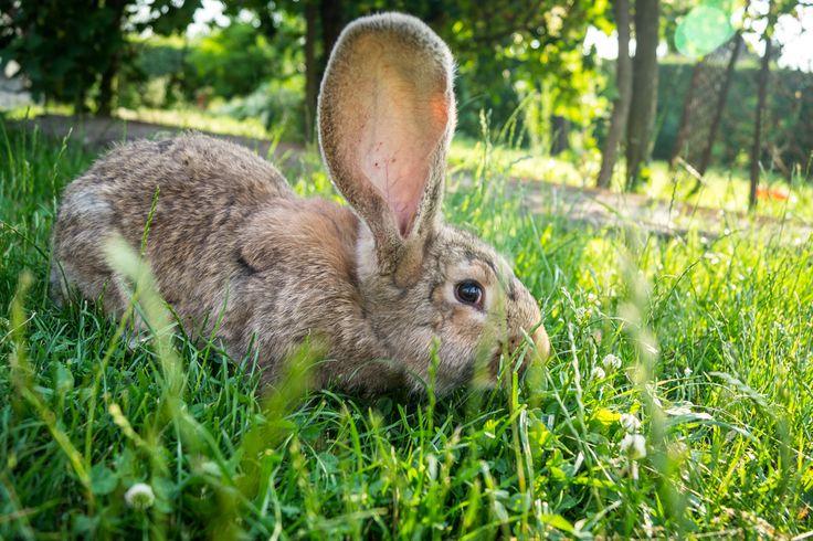 Rabbit taken with Sony SLT-A58 with kit lens  #Sony #rabbit #lightroom