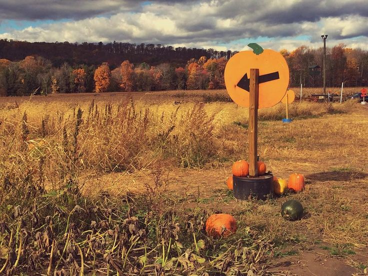 This way to the pumpkin patch. #october #pumpkin #pumpkins #farm #harvest #country #countryside #farming #paspotsfall #nature #pocket_family #pocket_family_fall_2 #naturephotography  #instalike #instaphoto #autumn #instalove #scenic #pumpkinpatch #pocket_farms #usa #rural #pennsylvania #mountains #landscape #field #landscape_lovers #skyporn #sky #halloween