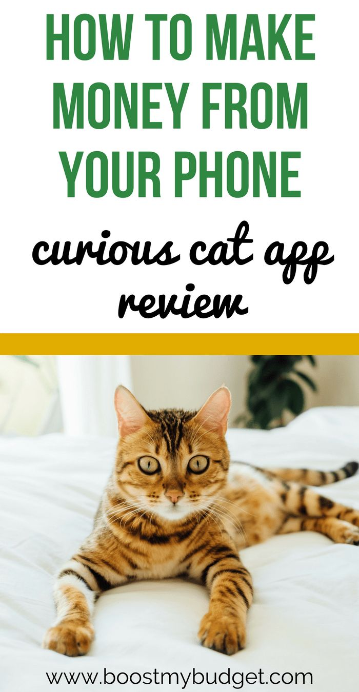 Want to make money from home? Curious Cat is a survey app that lets you make money from home or on the go! It has a low payment threshold, meaning you can get extra money today! I tested it out for a while. See how much extra money I made and if its worth your while. #makemoney #makemoneyonline #makemoneyfromhome