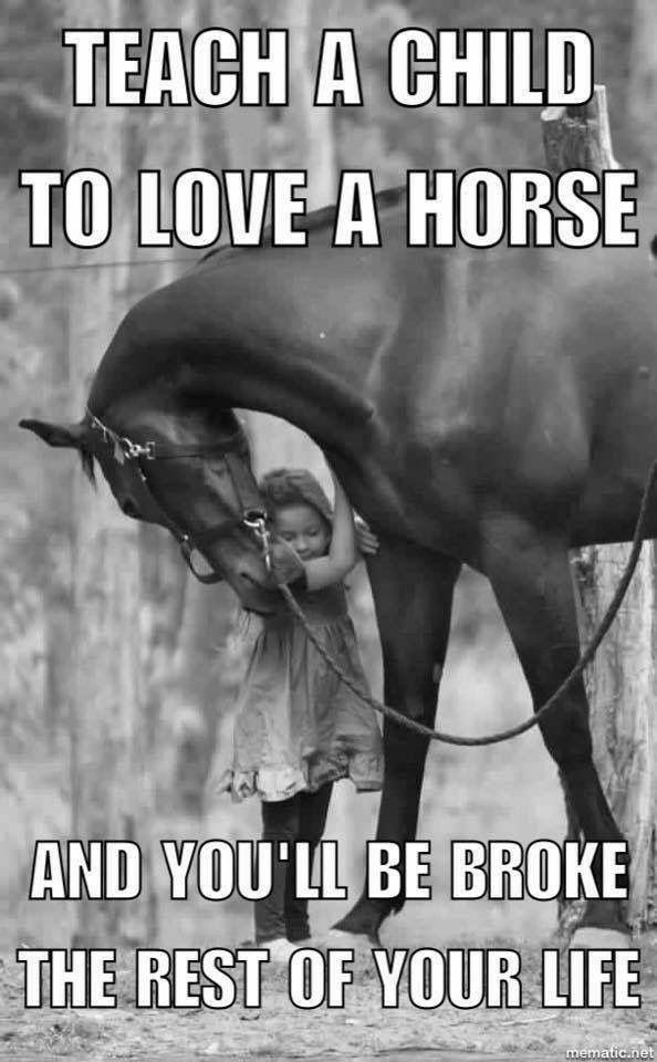 mooie paarden spreuken Pin by Jolie Schouren on Horses | Pinterest | Paarden, Dieren and  mooie paarden spreuken
