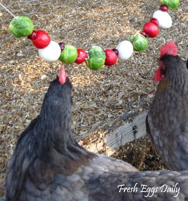Edible Christmas Garlands: brussels sprouts, cranberries, radishes, and hard boiled eggs, or feed them grapes, raisins, popcorn and walnuts in small containers to alleviate their boredom when they are confined to the coop.