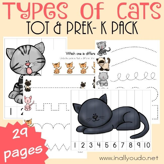 If you have a cat lover in your home, don't miss this ADORABLE Types of Cats Tot & PreK-K Pack perfect for your little learners. :: www.inallyoudo.net