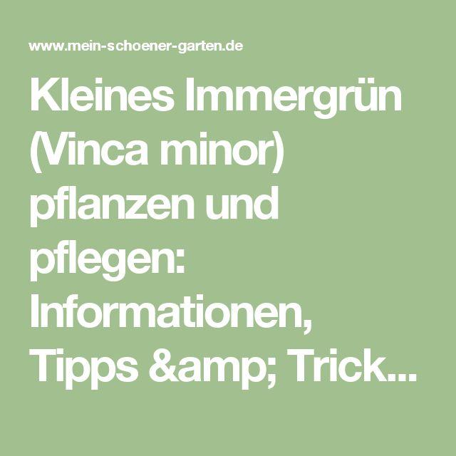 Kleines Immergrün (Vinca minor) pflanzen und pflegen: Informationen, Tipps & Tricks - Mein schöner Garten