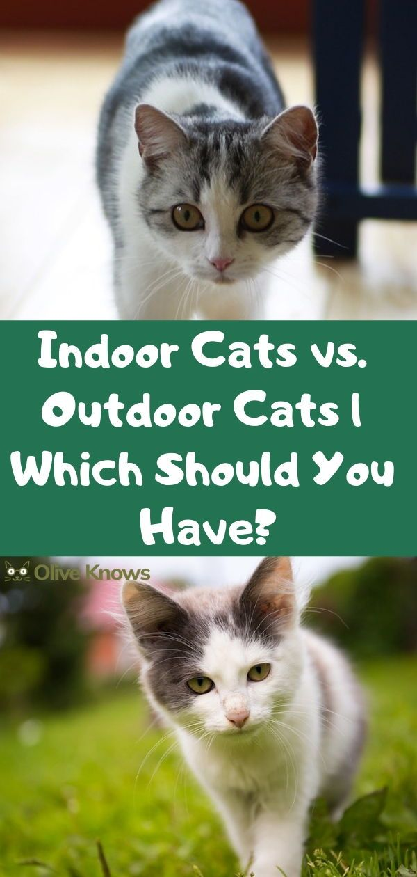 Indoor Cats Vs Outdoor Cats Which Should You Have Oliveknows Indoor Cat Cat Training Outdoor Cats