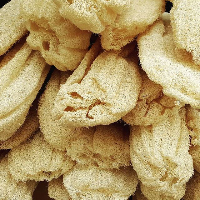 Sea sponge // Native only to the Aegean and Mediterranean sea.  Divers would risk their lives freediving to collect this natural sea sponge in the sea, diving 30 meters. These sponges are wonderful to bath with and lather soap onto your skin, but also to pat dry with after your bath ⚓ #mediterranean #seasponge #seatreasures #aegean #greece #lovefromcyprus