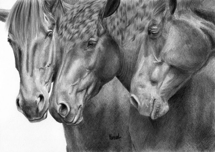 Trzy konie rysunek olowek