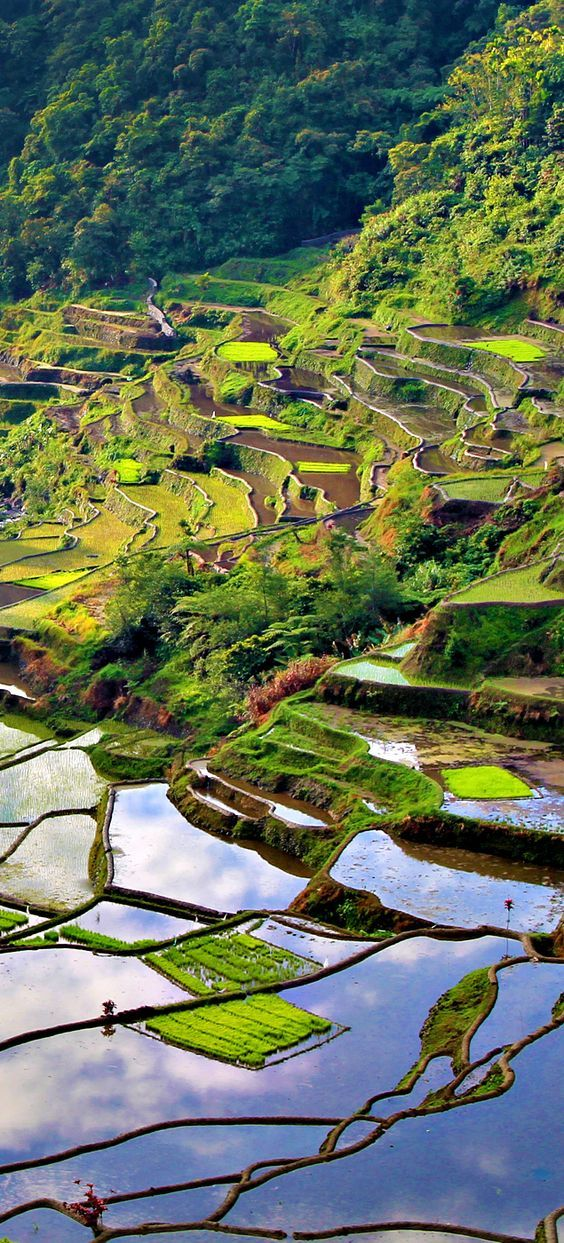 The two thousand years old Rice Terraces in Banaue (Philippines)