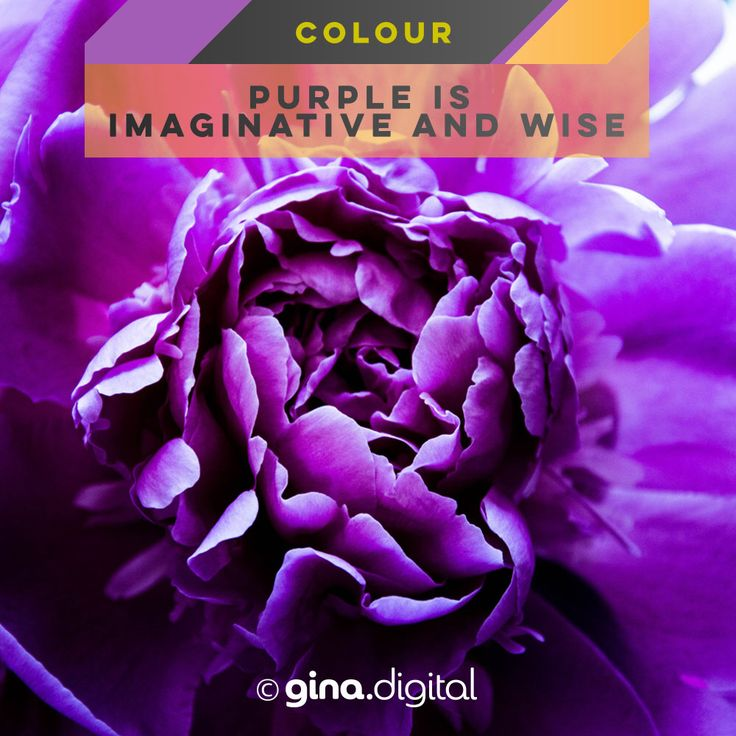 Purple is imaginative and wise. #ginadigital #purple #colormeanings #color