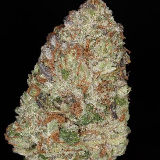 Purple Trainwreck Marijuana Strain Review And Pictures