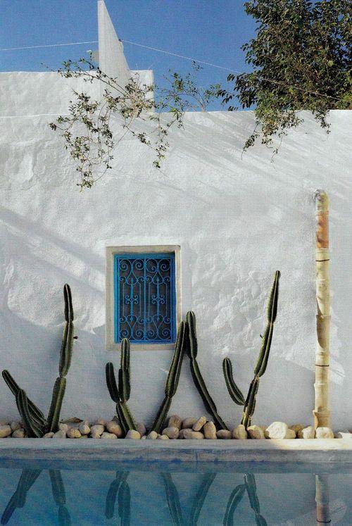 Cactus en la piscina.