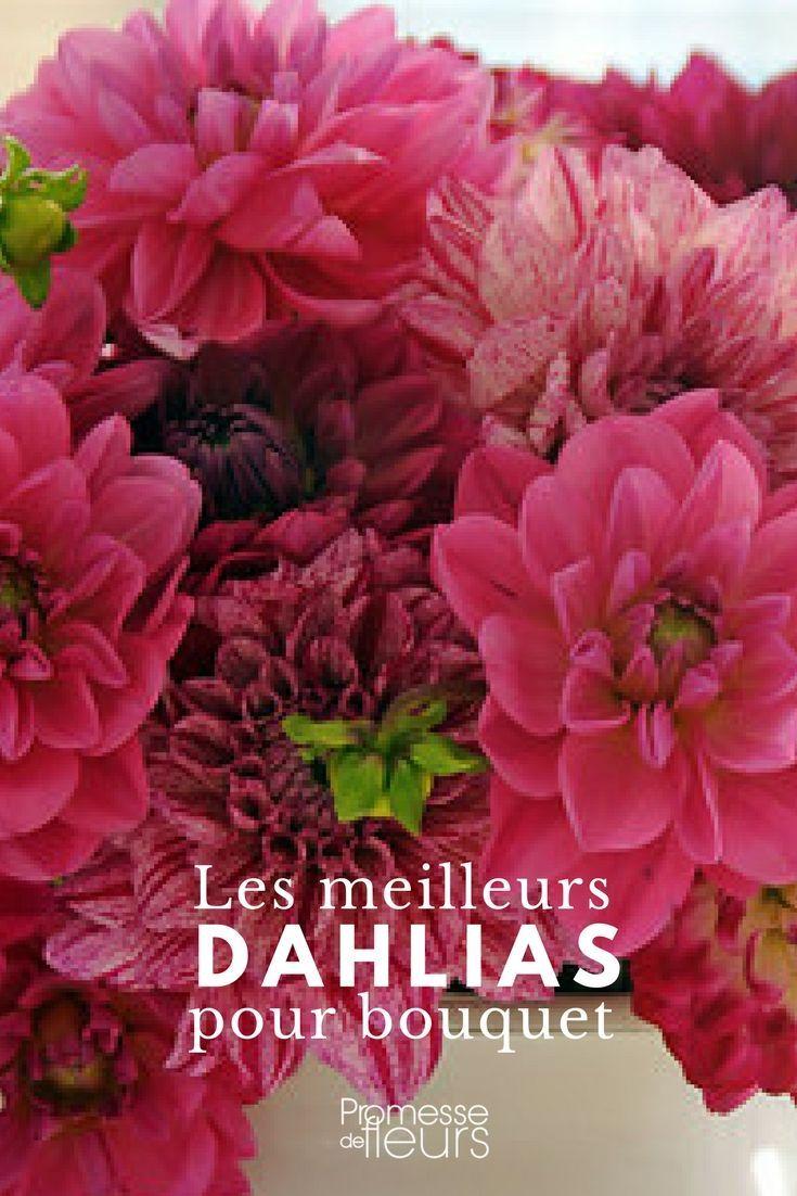 Dahlias : les meilleurs pour faire des bouquets | jardin ...