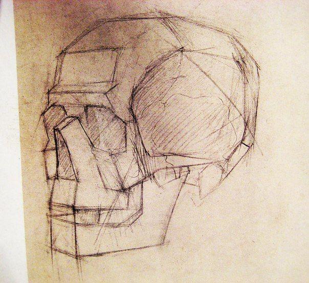 кости черепа анатомия для художников - Поиск в Google