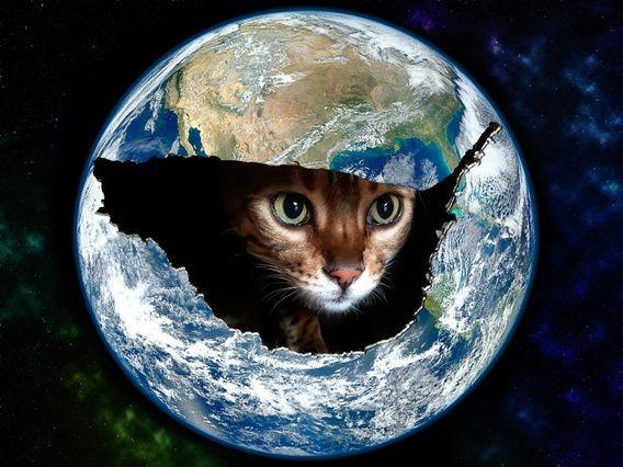Kat in de wereld
