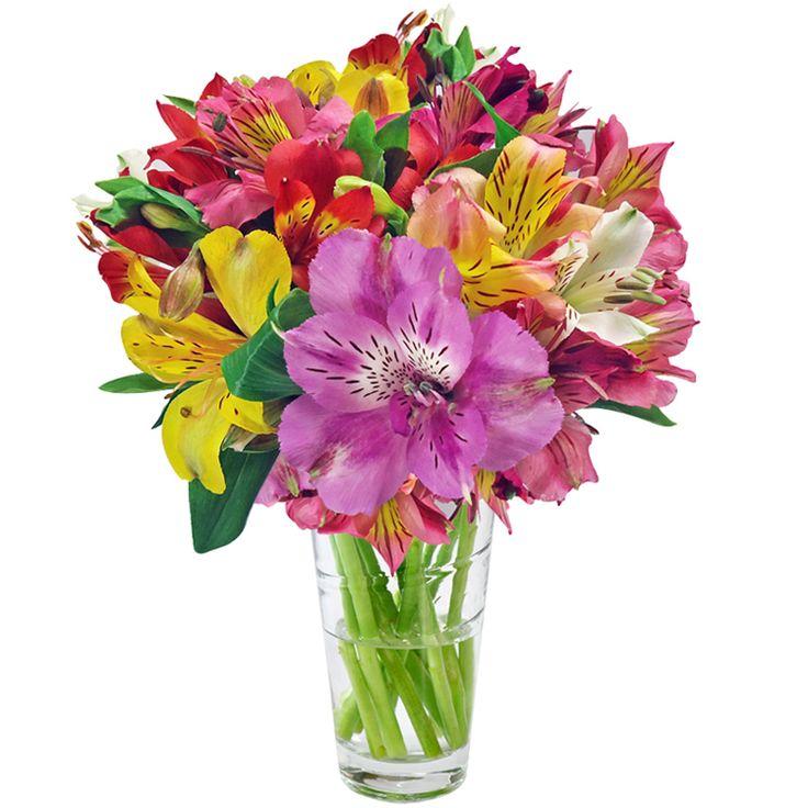 Astromélia é originária da América do Sul - Família Alstroemeriaceae - A flor Astromélia é originária da América do Sul, mais especificamente no Chile, Brasil e Peru. Esta planta desenvolve-se melhor em regiões com os climas Equatorial, Continental, Mediterrâneo, Temperado e Tropical, pois necessita de som intenso para crescer saudavelmente. A flor é encontrada na cor rosa claro,