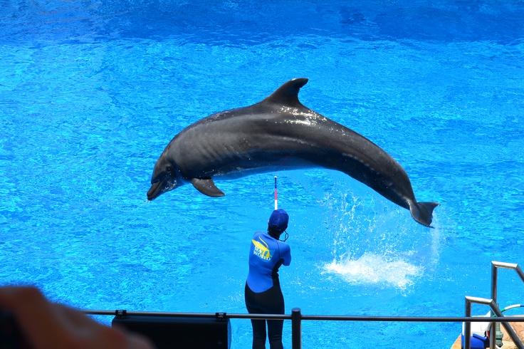 Dolphin show at Durban
