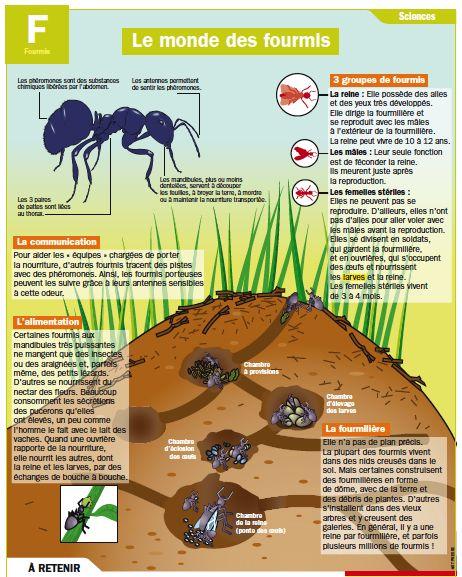 Fiche exposés : Le monde des fourmis
