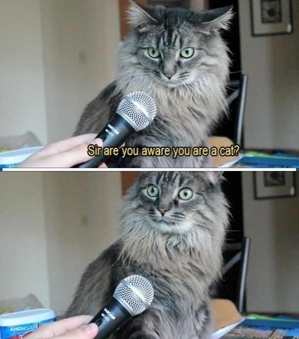 The gotcha question: | 28 Pictures That Will Make You Laugh Every Time #cats