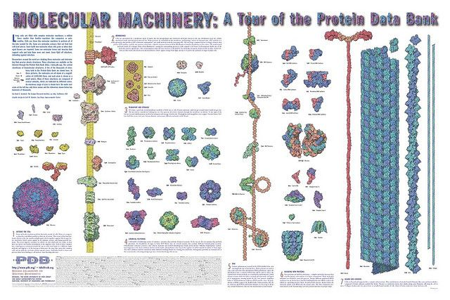 Molecular Machinery: A tour of the Protein Data Bank | par dullhunk