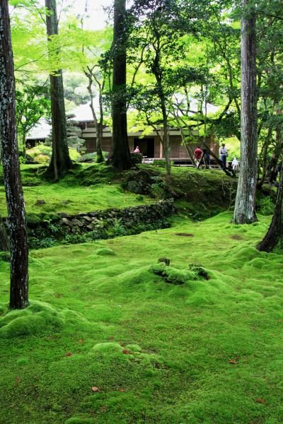 Moss Temple - Saiho-ji, Kyoto, Japan This is one of my all time favorite gardens in Japan. Must see and worth the extra effort.