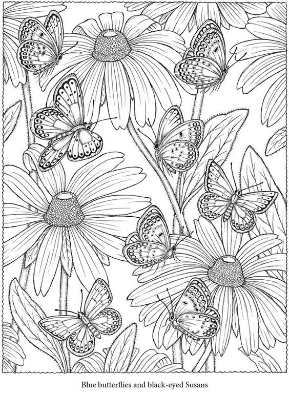 64 best coloring pages images on pinterest   coloring books ... - Advanced Coloring Pages Butterfly