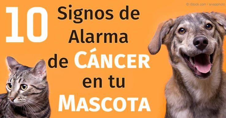 El cáncer de las glándulas mamarias, el linfoma, los tumores de mastocitos, y el cáncer de hueso son los tipos más comunes de cáncer en las mascotas.