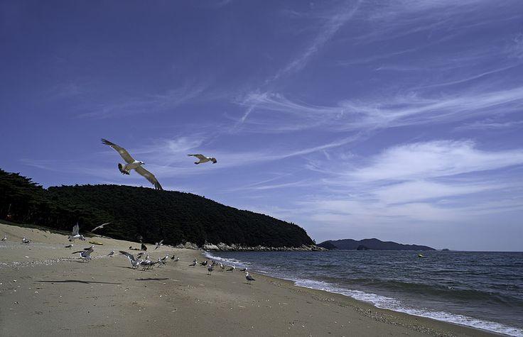 Island stowaways surviving at will :)  http://www.mattmacdonaldphoto.com