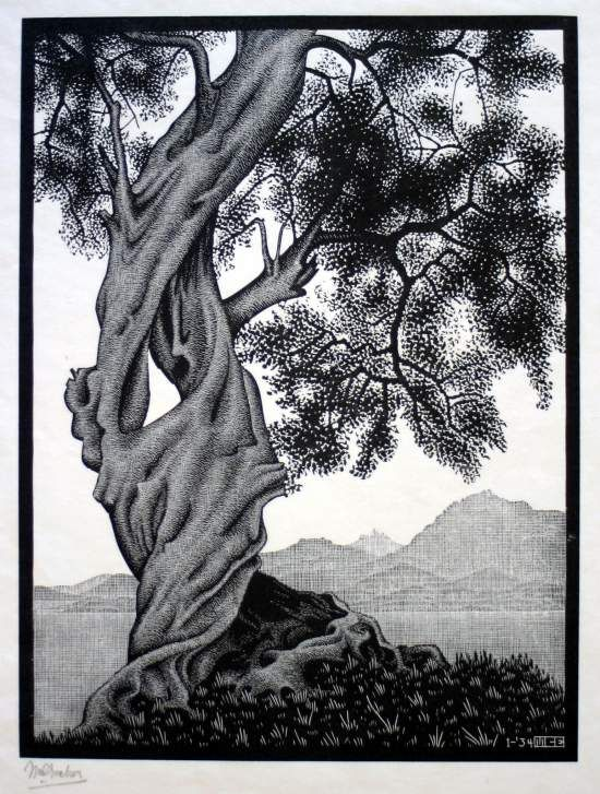 "Exploration of infinite: Maurits Cornelis Escher, ""Olive tree"", 1934. #Laudemio #oil #art www.laudemio.it"
