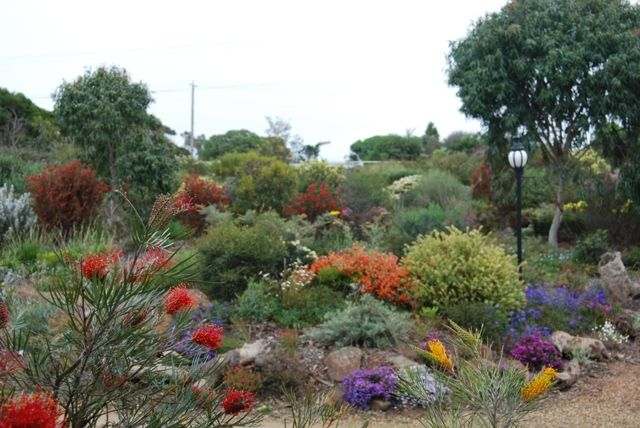Australian native plants (at Vaughan's Nursery, Curlewis, Victoria)