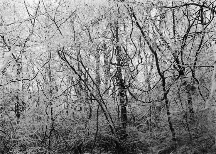 08. Sandy Creek (1998)