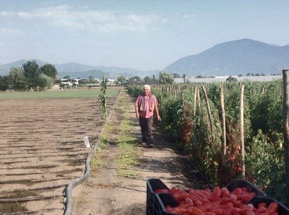 Campo di pomodori San Marzano