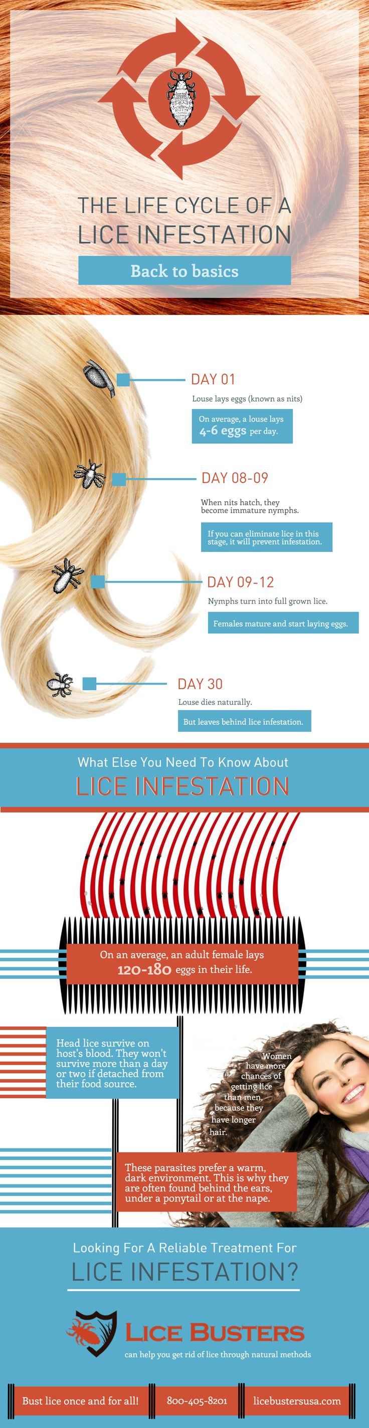 "Check out the infographic on ""The Life cycle of A Lice Infestation"". Looking for a reliable treatment for lice infestation? Lice busters can help you get rid of lice through natural methods. Bust lice once and for all. Call us now at 800-405-8201, or visit the website at https://www.licebustersusa.com"