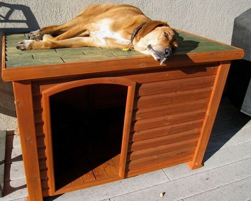 New Dog House Design Ideas Cheapdoghouse Cool Dog Houses Dog