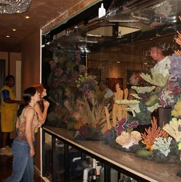 The Company Acrylic Tank Manufacturing Has Designed Custom Made Fish Tanks  For Many Celebrities, Such As Steven Spielberg And Chad Ochocinco.