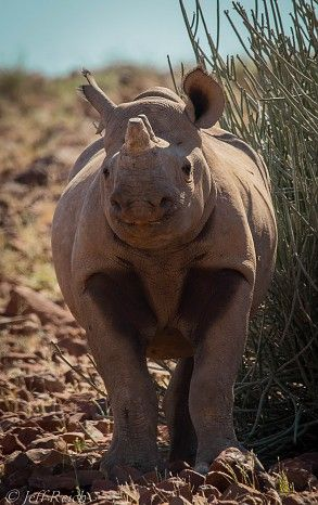 """We had an amazing experience at Desert Rhino. Firstly, we were treated with outstanding hospitality. Secondly, we had the opportunity to see many fantastic creatures on our three day excursion there. Many thanks to Liberty and the Camp Staff for a wonderful time!"""
