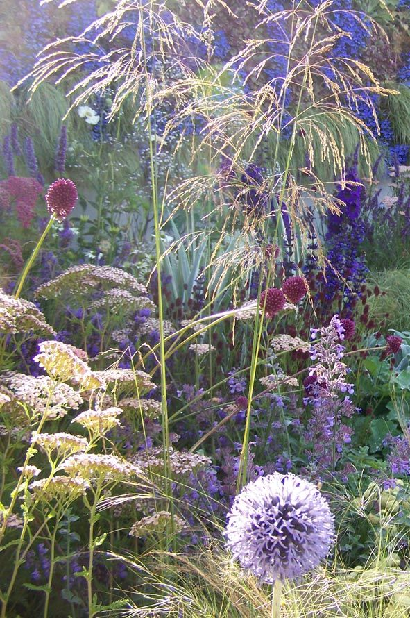[Deschampsia with assorted perennials]  I am in love with this combo - it looks like 'fireworks'.