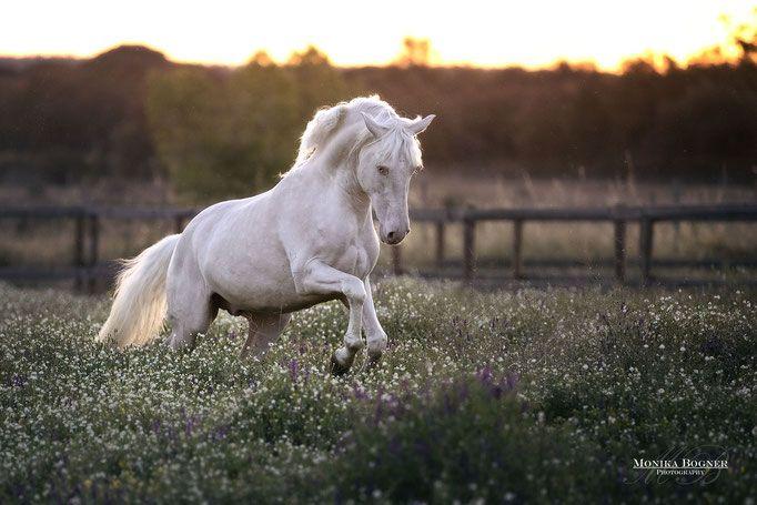 Portfolio – Monika Bogner Photography – Pferdefotografie und Hundefotografie in Bayern und ganz Deutschland
