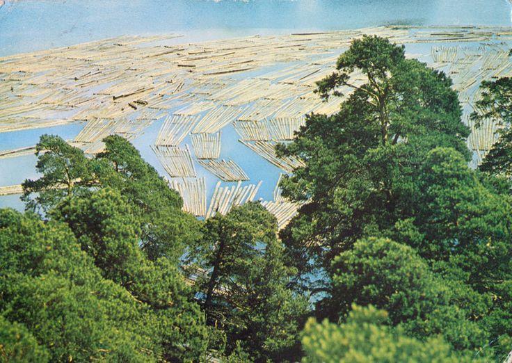 Incredibly Boring Postcard. Pojezierze Augustowskie Spław drewna na Jeziorze Białym (Lake Augostowskie Timber Rafting on White Lake) Poland, 1960s.