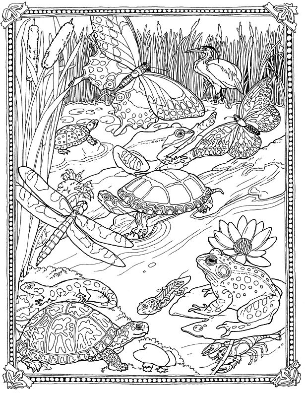 Jan Brett - Free Mossy Coloring Page - Lily pad Pond - so pretty!