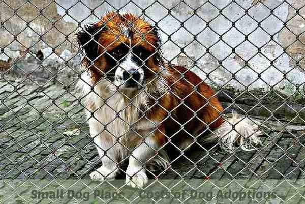 Dog Adoption Costs?  Do you know what they will be?  Find out.  Small Dog Place