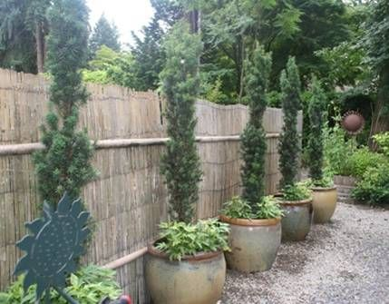 Narrow garden next to house google search landscape for Tall evergreen trees for small gardens