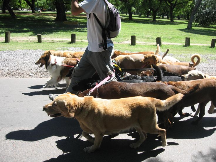 What Insurance Do I Need For Dog Walking Business