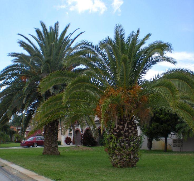 Palm Tree Island: 17 Best Images About Deborah Prophetess On Pinterest
