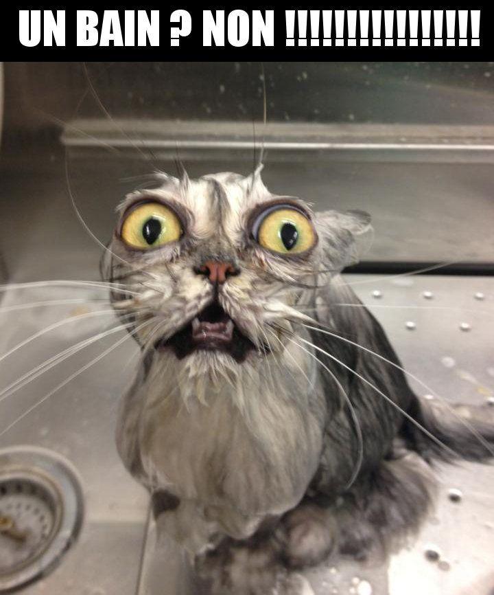 Le chat mouillé