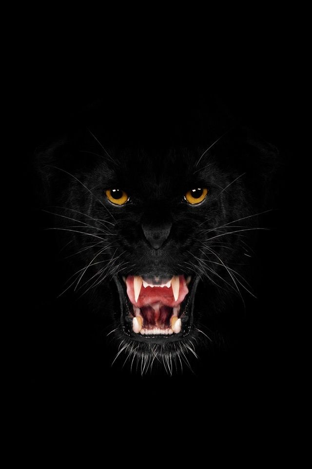 """Black cat ... """"Beautiful and Fast ...  """"BAD To The Bone"""" ..."""