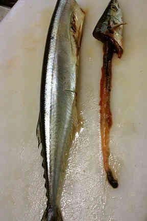 簡単!早い!きれい!秋刀魚の内臓のとり方の画像