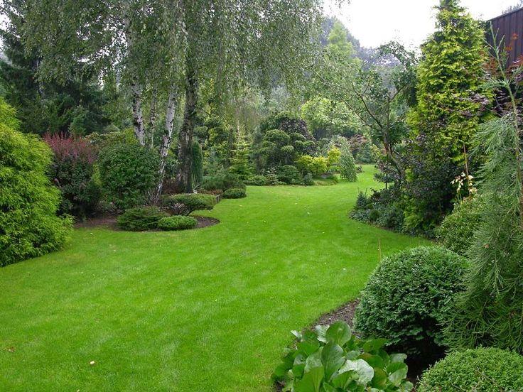GardenTalk.co.uk - my dwarf conifers[flash=200,200][/flash][flash=200