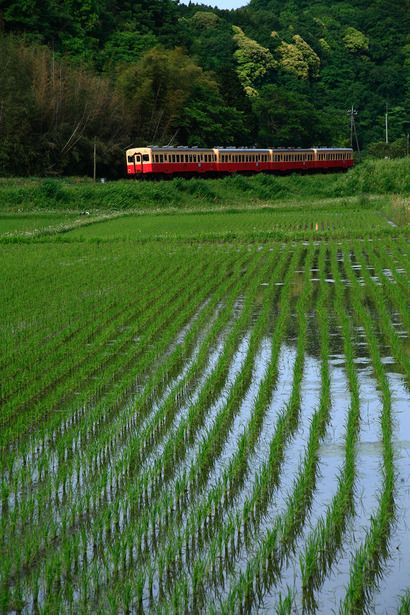 Trens e Locomotivas by Daniel Alho / Kominato Line running in rice fields of Chiba, Japan