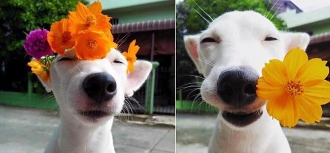 Sanatlı Bi Blog Köpek Yavruları ve Çiçeklerin Birleşiminden Oluşan 30+ Sevgi Dolu Fotoğraf 42